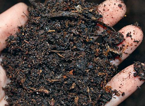 Консистенция грунта для посадки башмачков