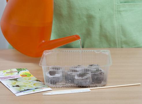 Эшшольция, выращивание рассады в торфяных таблетках, подготовка таблеток