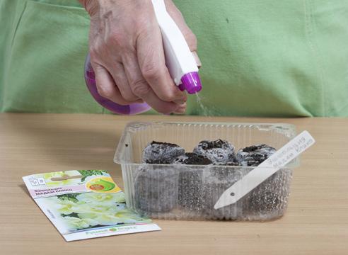 Эшшольция, выращивание рассады в торфяных таблетках, увлажнение посевов
