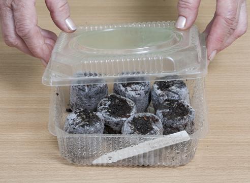 Эшшольция, выращивание рассады в торфяных таблетках, защита посевов от пересыхания