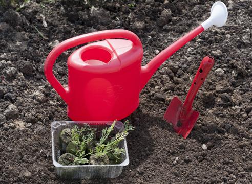 Эшшольция, выращивание рассады в торфяных таблетках, рассада готова к высадке в грунт