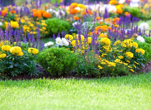 цветочная палитра; цветник с бархатцами