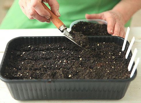 Лук рассадой, мастер-класс. Ставим этикетки и присыпаем семена землей