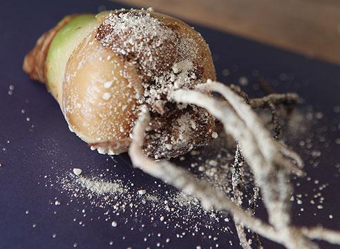 Пораженная луковица