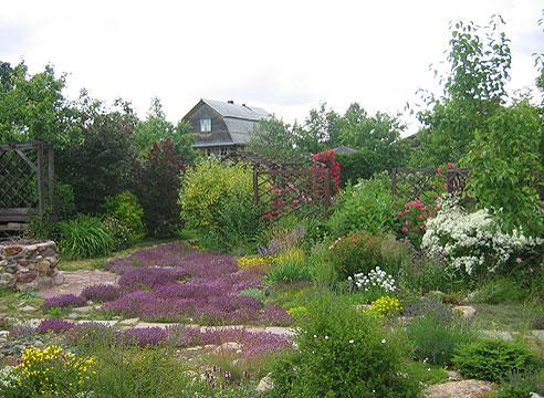 Сад Галины Дубовой, тимьян