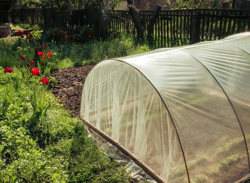 При какой температуре закаливать рассаду помидор