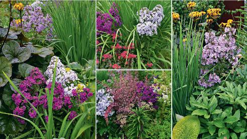Мелкоцветковые флоксы в цветниках