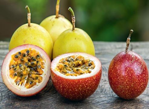 пассифилора урожай в домашних условиях, Плоды пассифлоры, маракуйя