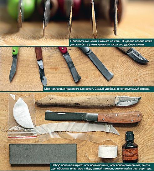 Прививка хвойных растений, как привить хвойные растения вприклад, прививочные ножи, инструменты для прививки