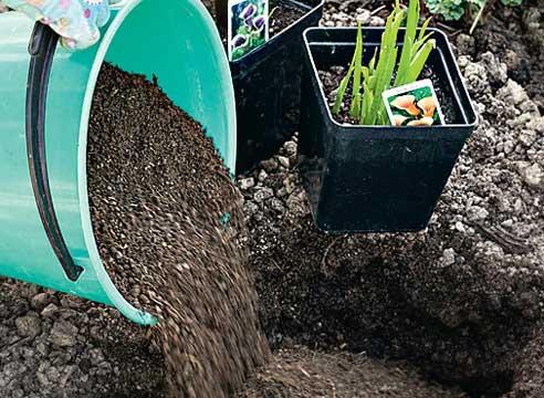 выращивание каллы, посадка клубня каллы