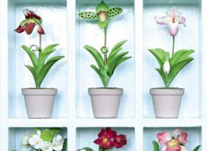 Фитоверм для орхидей как разводить