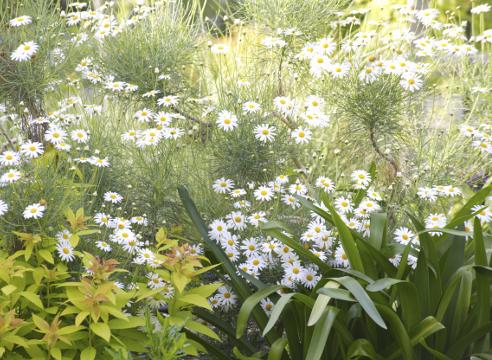 цветочная палитра; белый цветник