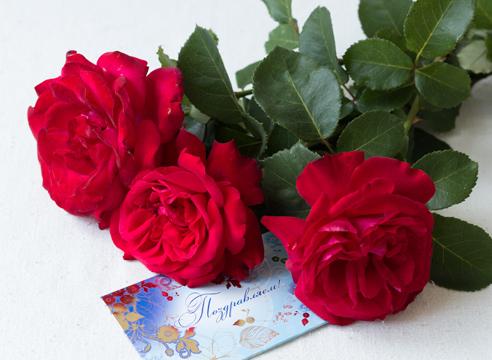 роза из букета, черенкование роз