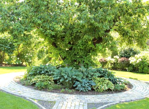 Сад Екатерины Локшиной, композиция с декоративными многолетниками, сочетание растений, Центральная яблоня летом