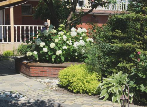 Сад Екатерины Локшиной, идеи для сада, гортензия, Зеленая зона перед домом