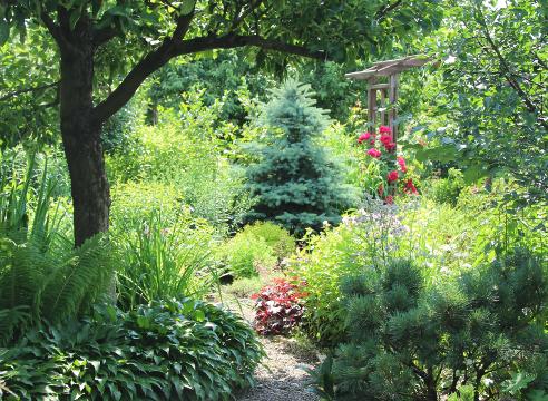 Сад Екатерины Локшиной, Прогулки по саду, теневой сад