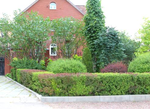 Сад Екатерины Локшиной, Входная зона, идеи для сада, барбарис, стриженая изгородь  из барбариса