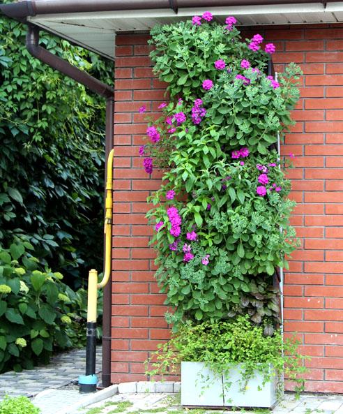 Сад Екатерины Локшиной, Вертикальный модуль, петуния в дизайне сада, вертикальное озеленение