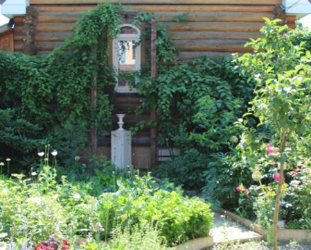 Сад Екатерины Локшиной, идеи для сада, вертикальное озеленение, Баня увита лианами
