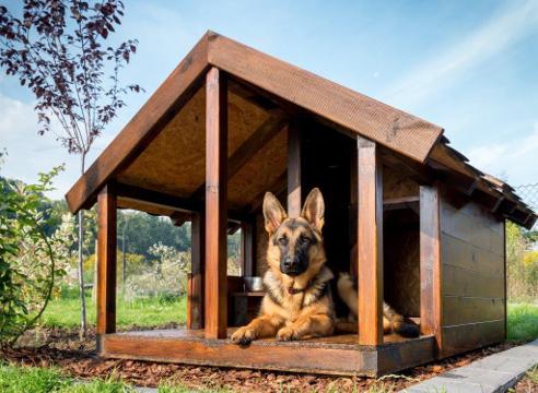 Вольер для собаки, благоустройство участка, сторожевая собака