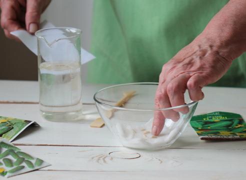 Замачивание семян огурцов - обработка перед посевом