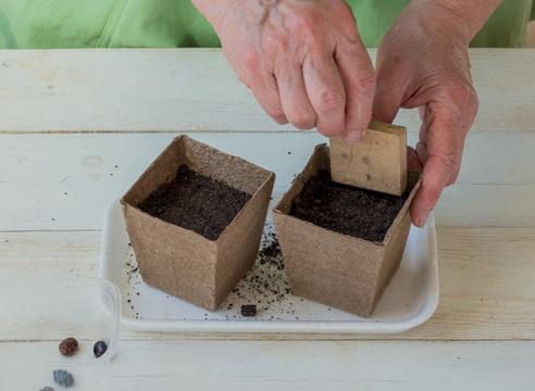 Рассада клещевины в домашних условиях, земля для посева семян