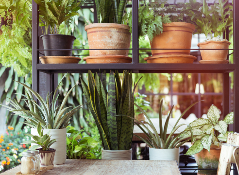 идеи для дома, комнатные растения