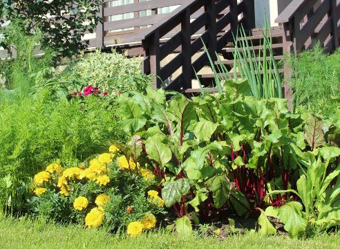 Сад Галины Скалкиной, идеи для сада, сочетание растений, декоративный огород, грядка