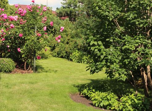 Сад Галины Скалкиной, идеи для сада, дизайн сада, розы в саду, с чем посадить розы