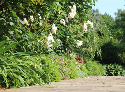 Сад Галины Скалкиной, идеи для сада, дизайн сада, розы в саду