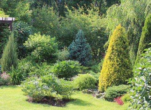 Сад Галины Скалкиной, идеи для сада, дизайн сада, хвойные в саду, сочетание растений