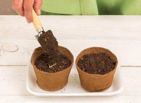 рассада арбуза в домашних условиях, мастер-класс, фото, как сеять арбуз