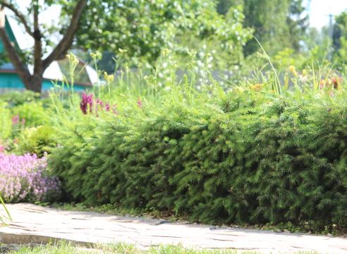 Сад Дмитрия Патрикеева, идеи для сада, дизайн сада, цветники, высокая клумба, мощение, бордюр, каркасный цветник, приподнятый цветник, живая изгородь, стриженая изгородь из ели
