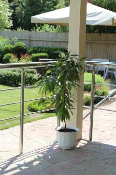 Сад Дмитрия Патрикеева, идеи для сада, дизайн сада, цветники, высокая клумба, мощение, бордюр, каркасный цветник, приподнятый цветник, терраса, мощение, фикус