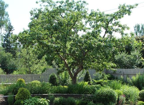 Сад Дмитрия Патрикеева, идеи для сада, дизайн сада, что сажать под деревьями