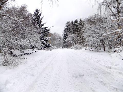 ботсад МГУ, куда пойти с детьми, зимние прогулки с детьми