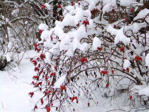 ботсад МГУ, зимний сад, куда пойти с детьми