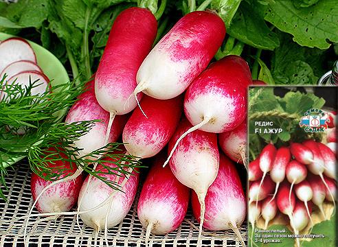 редис Ажур, семена СеДеК, сорта овощей