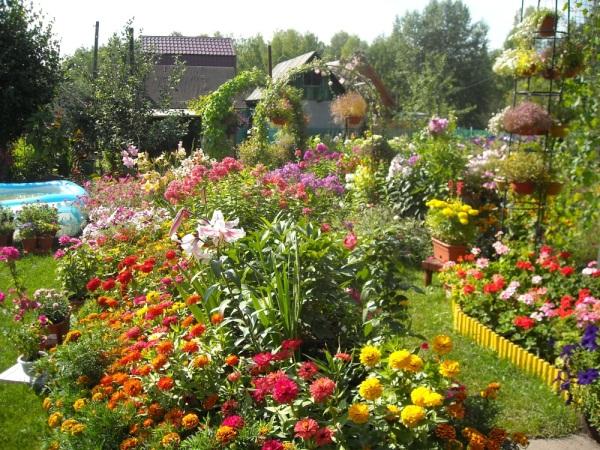 Дизайн цветов в огороде