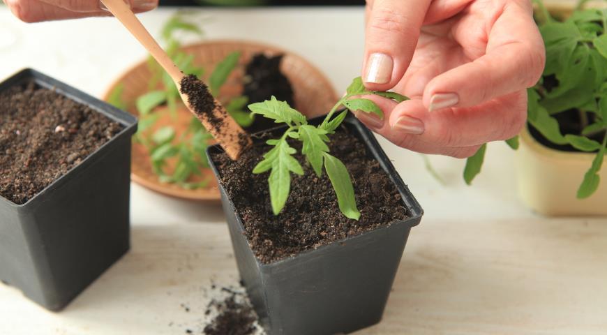 Чем подкормить рассаду помидор: удобрения и сроки 89