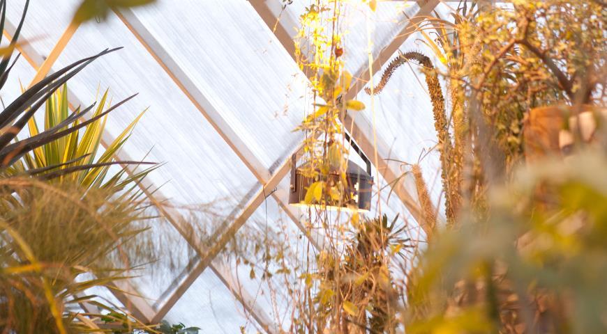 Искусственная подсветка растений в зимнее время