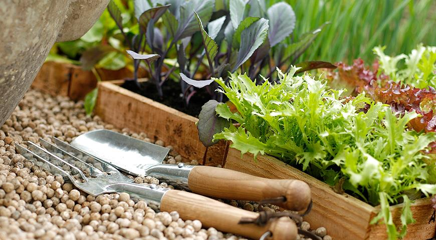 Когда сажать овощи. Сроки посадки семян основных