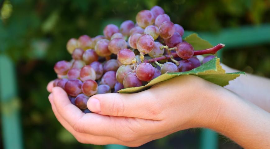 Горсть винограда