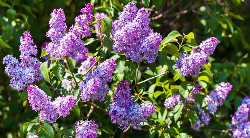 декоративные цветы домашние названия и фото