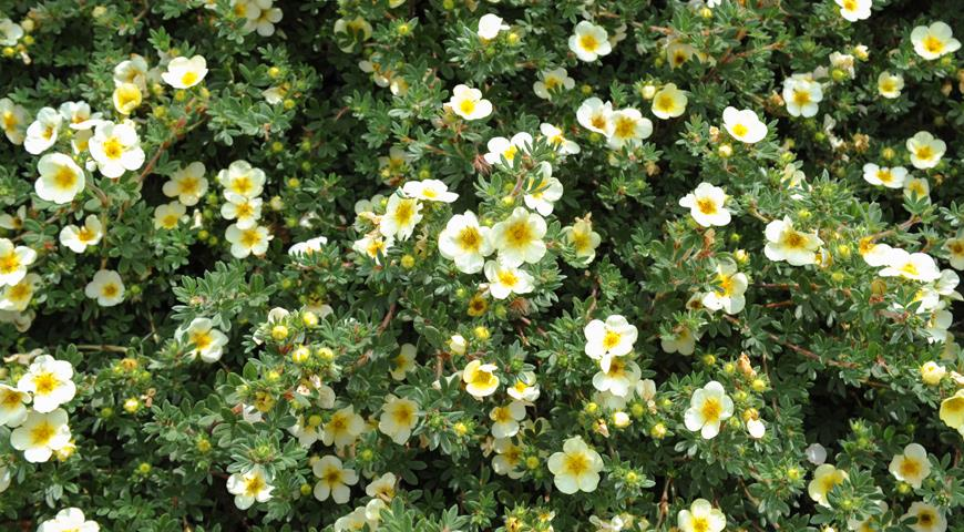 Цветок 50