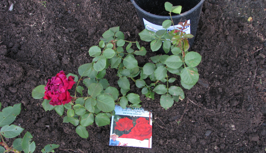 Земля для роз