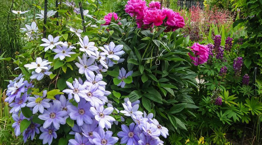 луковичные и лилейные цветы фото