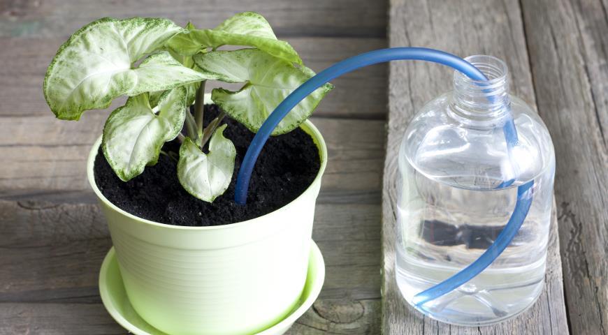 Инструкция по подключению системы капельного полива для горшечных растений archimedes