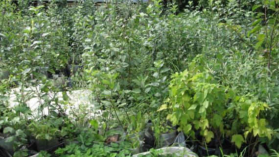 Названия и фото болотных растений аир ирис манник