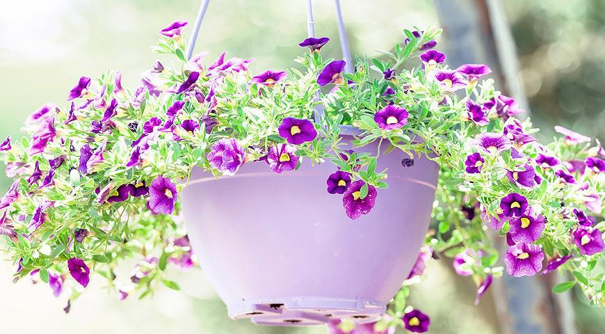 Контейнерное цветоводство - Зеленая Аура